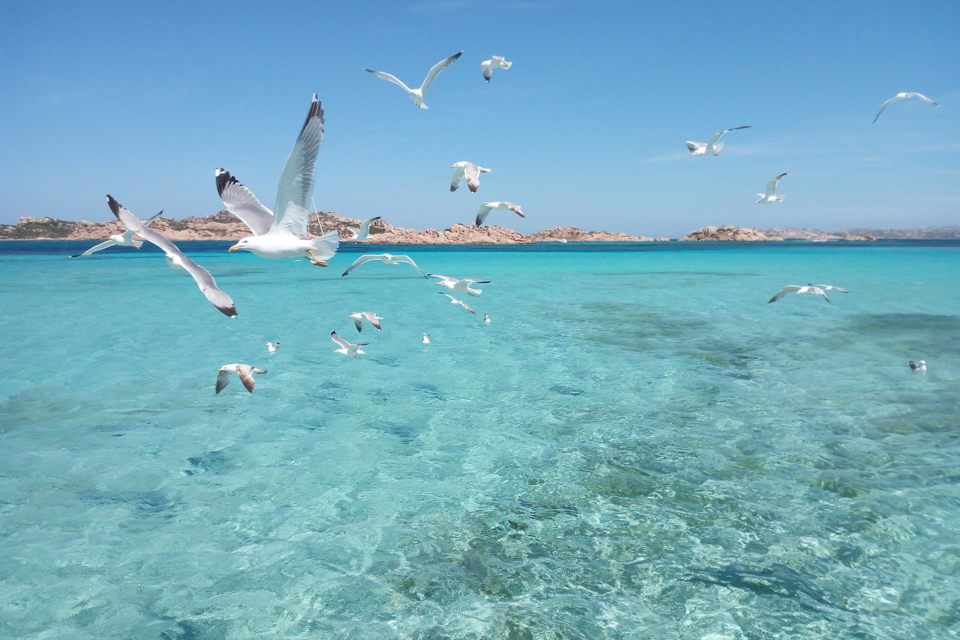 Gabbiani Dell'Arcipelago
